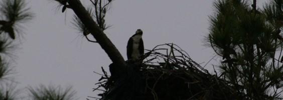 osprey next 004