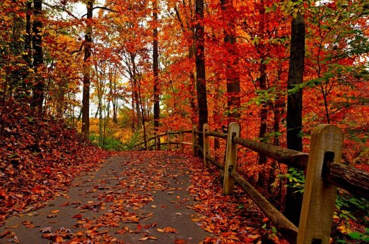 nature-forest-park-trees-leaves-colorful-road-path-autumn-fall-colors-walk-leaves-autumn-nature-tree-road-forest-park