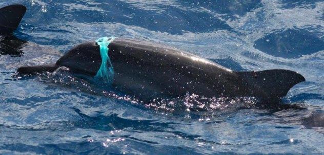 dolphin-plastic